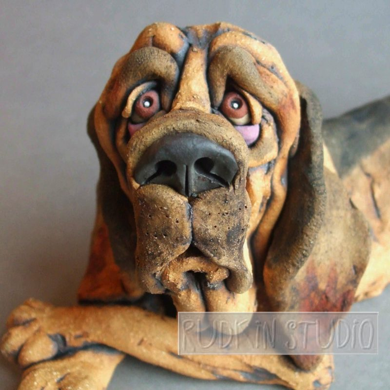 Droopy Bloodhound Close